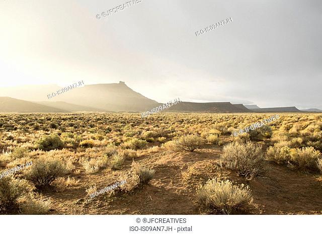 Arid landscape, Virgin, Washington County, Utah, USA