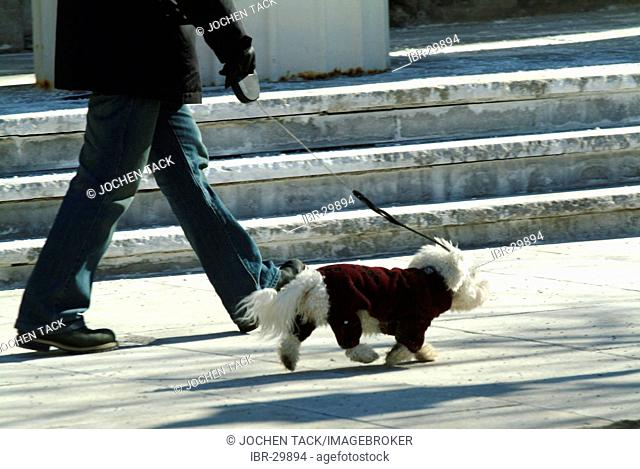 CAN, Canada, Montreal: Dog with a winter coat
