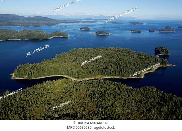 Spruce (Picea sp) forests on islands, Inside Passage, southeast Alaska