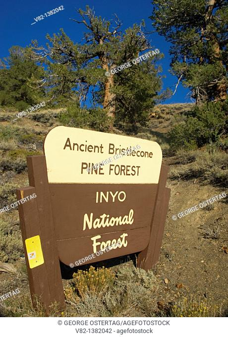 Entrance sign, Ancient Bristlecone Pine Forest, Ancient Bristlecone National Scenic Byway, Inyo National Forest, California