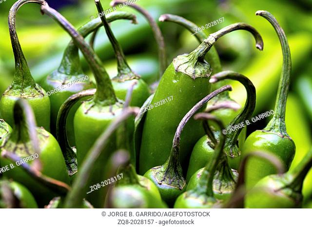 Lot of green chili as a food background