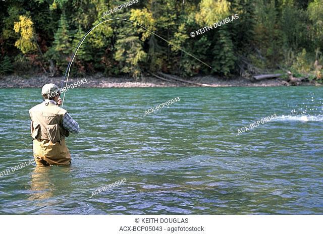 Lady angler playing steelhead, Bulkley river, British Columbia, Canada
