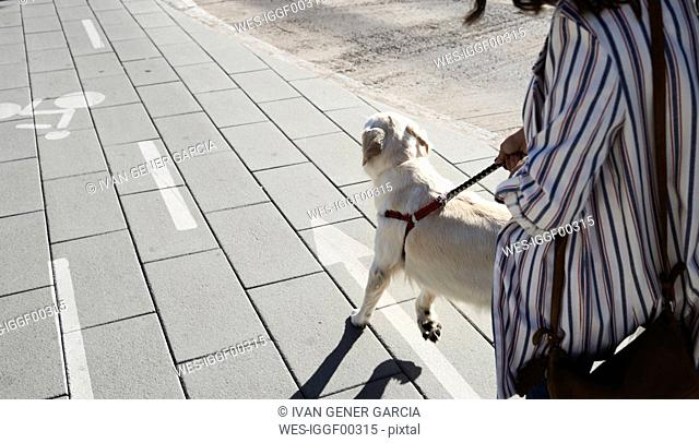Young woman going walkies with her dog on pavement