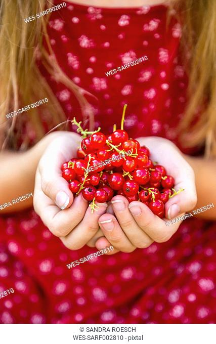 Hands of girl holding red currants