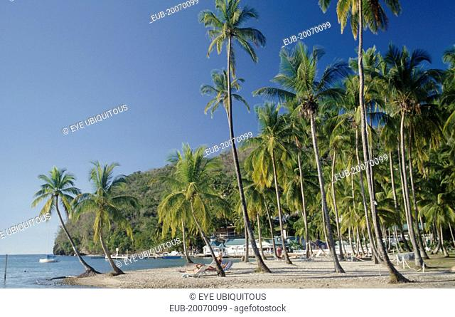 Sunbathers on stretch of sandy beach with palm trees to waters edge