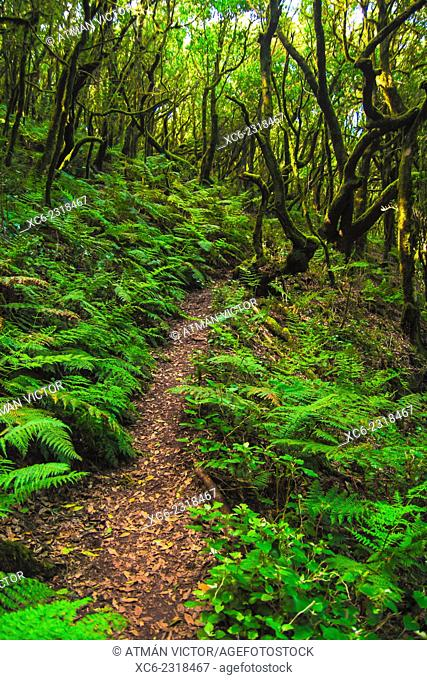 El Cedro National Park and forest in La Gomera island. Spain