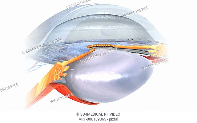 Animation depicting a close up rotation of the eyes Anterior Chamber and Posterior Chamber