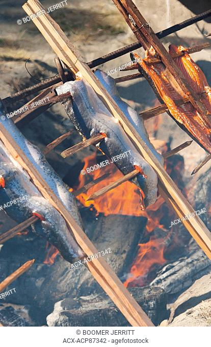 Salmon baked traditionally over a fire during Salmon Festival held on Malcolm Island in the tiny village of Sointula