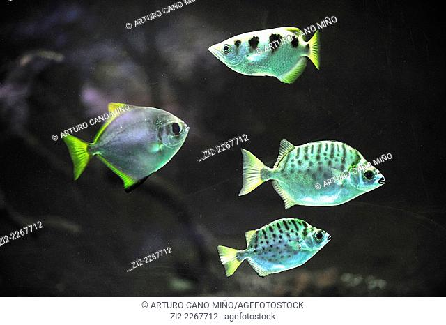 Sea fish. Zoo-Aquarium Casa de Campo. Madrid, Spain
