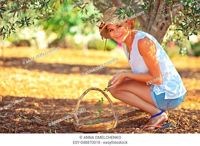 Young farmer woman harvesting in an olive garden, picking up little green berries into the basket, spending good time in countryside