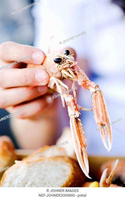 Hand holding crayfish