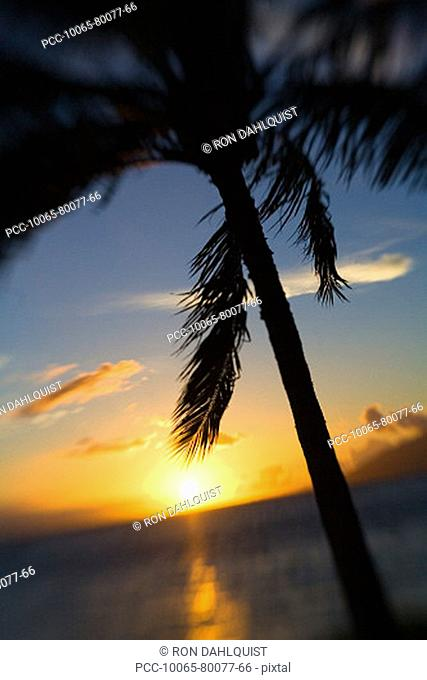 Hawaii, Palm tree silhouetted by yellow sunset over ocean
