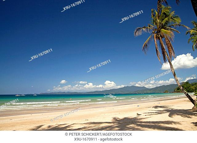 Coconut Palm Cocos nucifera on the beach of Sabang, Palawan, Philippines, Asia