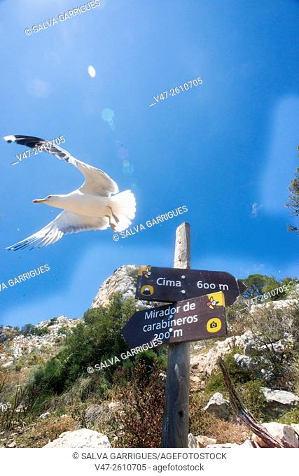 Seagull perched on a sign of a trail on the Rock of Ifach, Calpe, Alicante, Spain