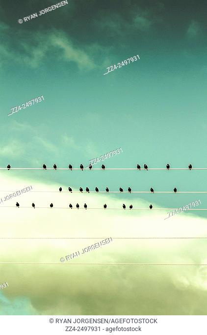 Musical concept of song birds on five lined stave. Electric orchestra
