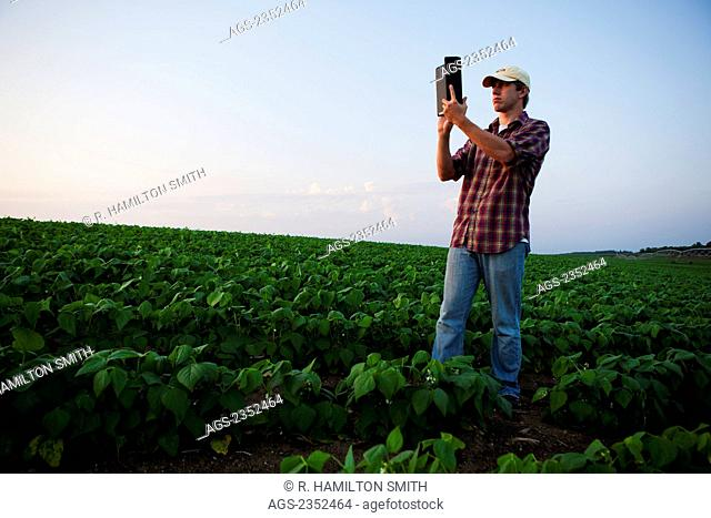 Agriculture - A young farmer in an early growth soybean field at dusk records his field using his Apple iPad camera. This represents the next generation of...