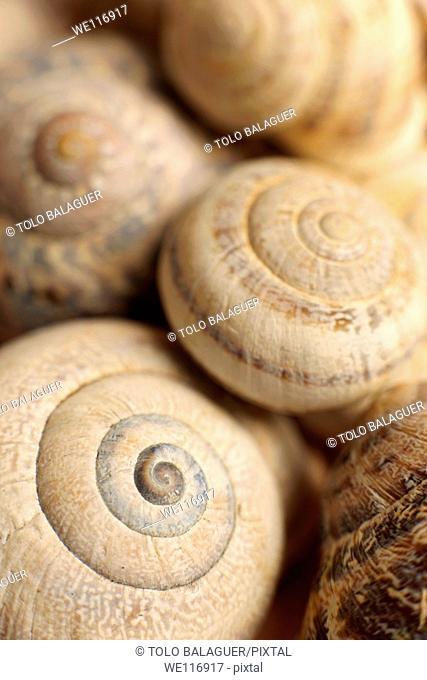 Snail shell Mallorca Balearic Islands Spain
