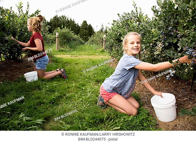 Caucasian girls picking blueberries