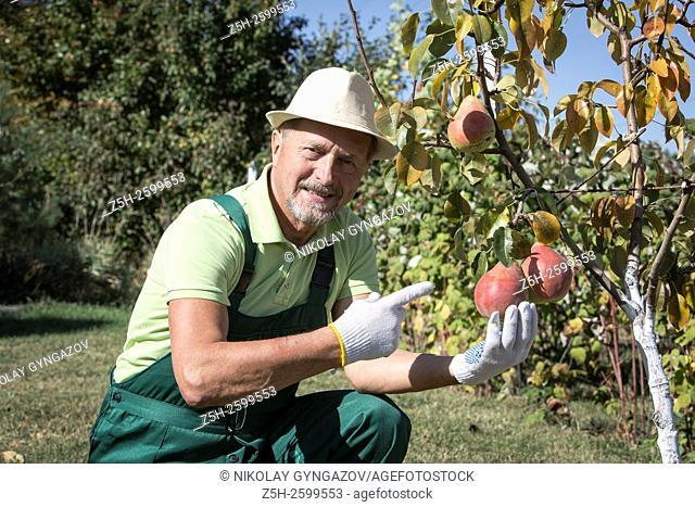 Russian Federation. Belgorod region. The village Solomino. The man in the autumn garden
