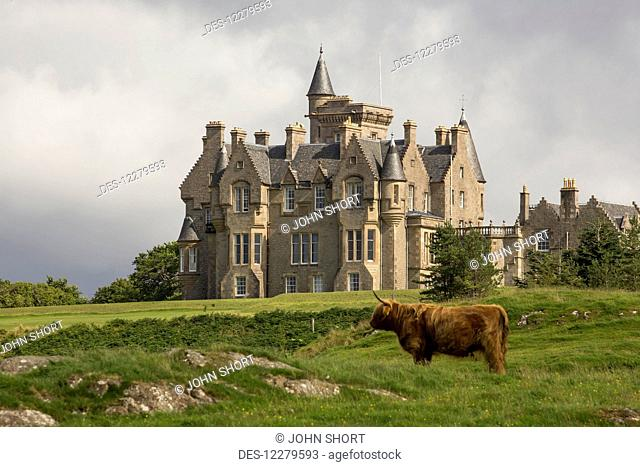 Large house and highland cattle in a grass field; Isle of Mull, Argyll and Bute, Scotland