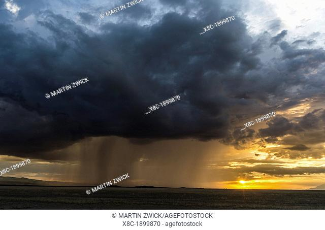 Storm over Amboseli National Park in Kenya  The storms are forming over the nearby slopes of Mount Kilimanjaro  Africa, East Africa, Kenya, Rfit Valley Province