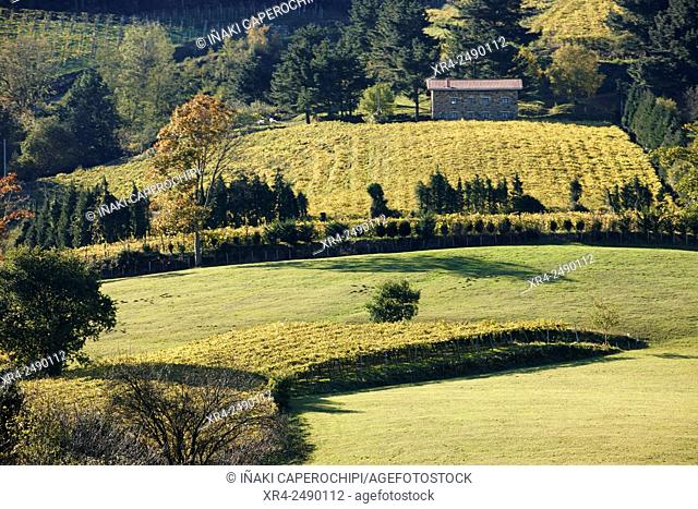 Spain, Guipuzcoa, Getaria, Rural landscape with Txakoli vineyards in Basque Country