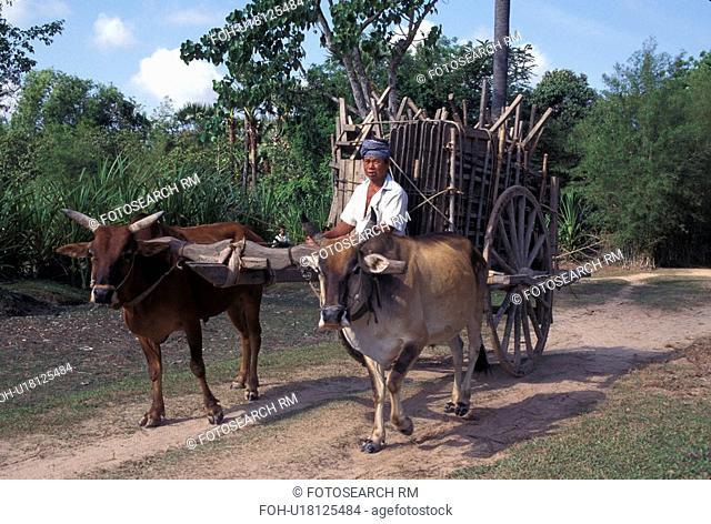 svay, person, cart, bullock, cambodia, people