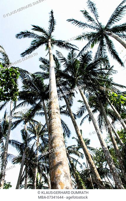Palm grove of Yonehara on Ishigaki in Japan