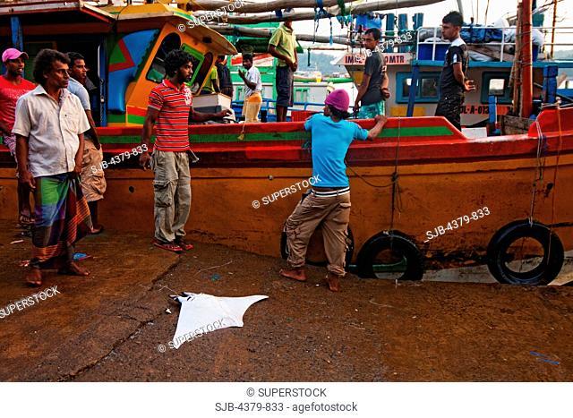 A dead devilray on a dock in the harbor, Mirissa, Sri Lanka