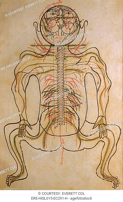 The nervous system, from MANSUR'S ANATOMY, authored by the Persian scholar and physician, Mansur ibn Ilyas ca. 1370-1423