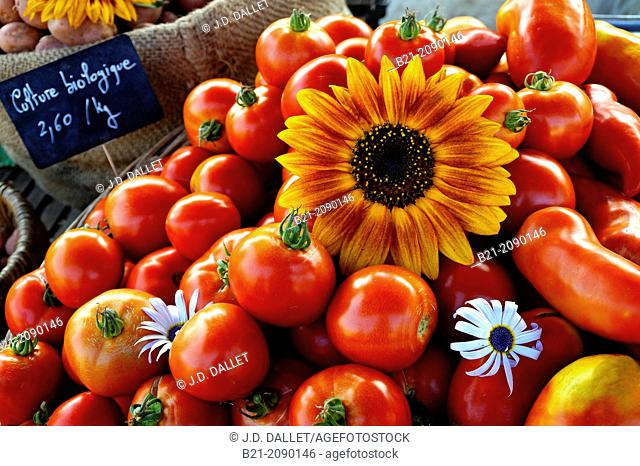 Tomatoes from a Bio farm on the market at Thenon, Dordogne, Aquitaine, France