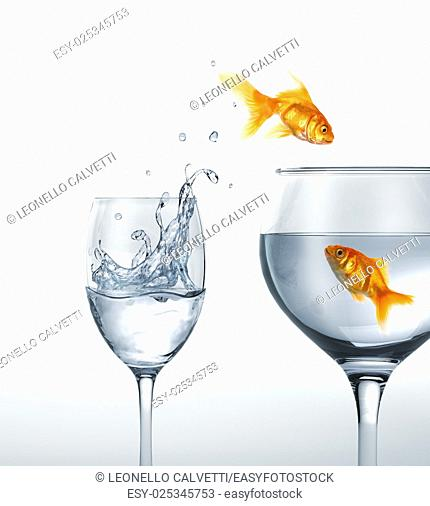 Gold fish smiling jumping from a glass of water, to a larger one, where another fish is waiting. On white background