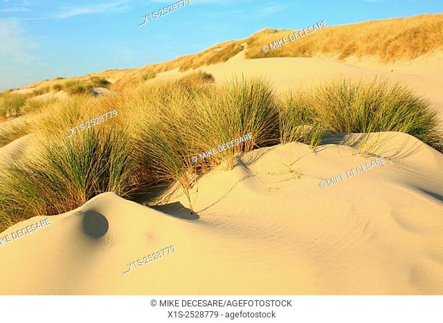 Oregon sand dunes include tall grass that extends up the dunes at Siltcoos Beach