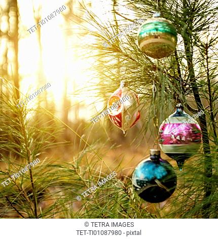 Christmas ornaments hanging from tree