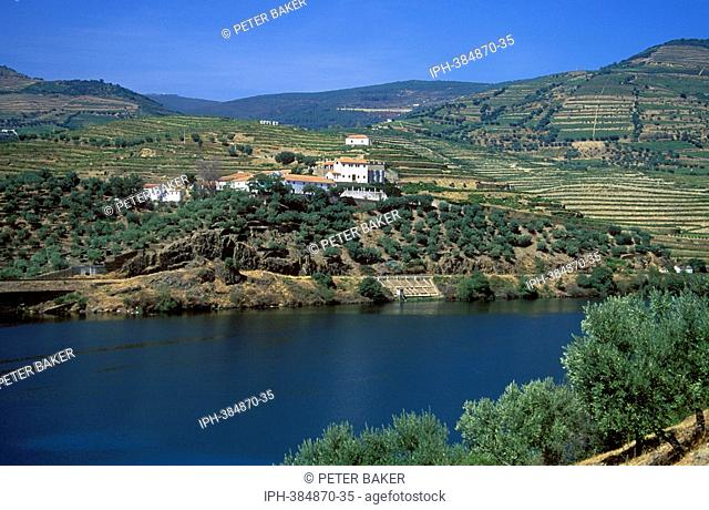 Vineyards overlooking the Douro Valley, an area famous for the production of port wine, near the town of Quinta da Foz