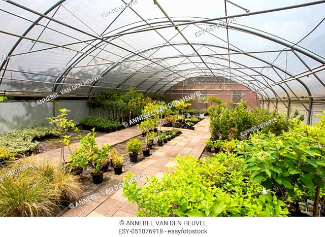 plants growing in greenhouse on a sunny day. Sustainable agriculture concept. various plants