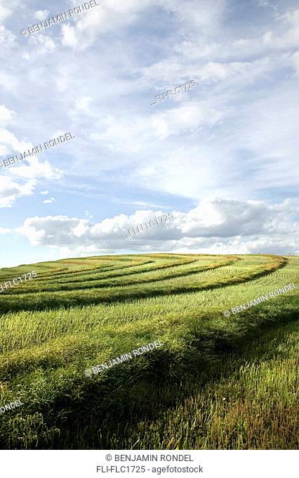 Prairie field, Saskatchewan, Canada