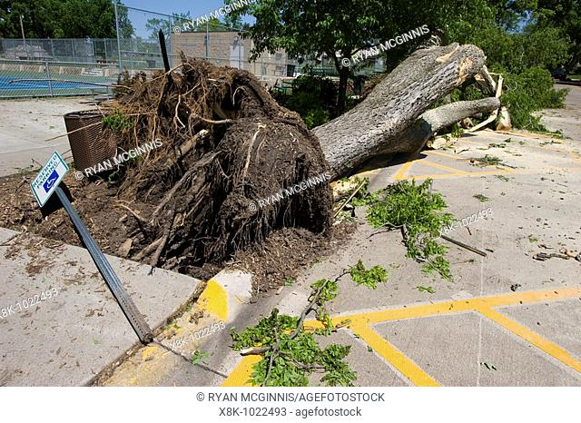 A downed tree near Harmon park in Kearney, Nebraksa, May 30, 2008  Kearney was struck by an EF-2 tornado May 29, 2008