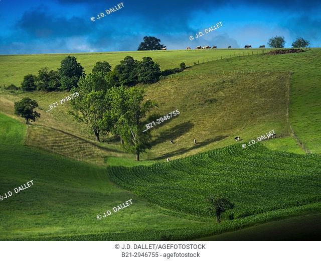 France, Auvergne,Cantal, landscape near Maurs