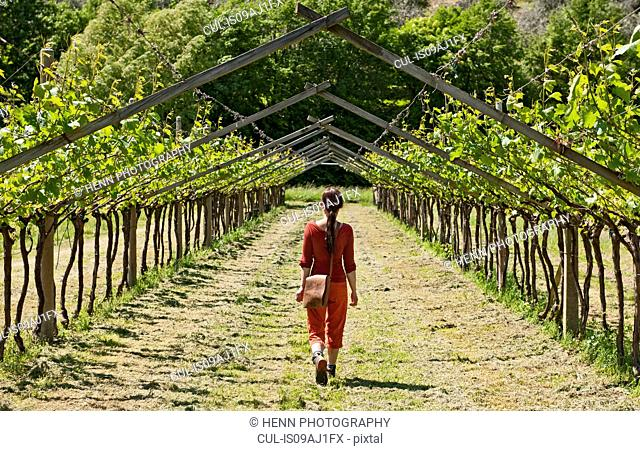 Rear view of woman strolling through vineyard, Arco, Trentino, Italy