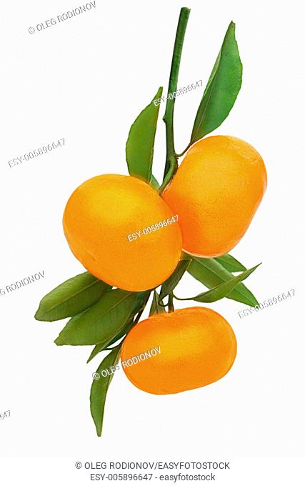 Fresh ripe tangerines with green leaves isolated on white background