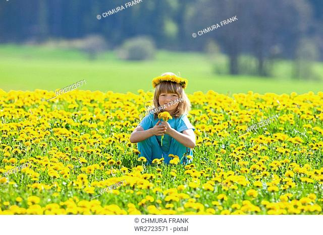 blond, boy, Caucasian, child, colour, dandelion, field, flower, grass, meadow, nature, one, picking, rural, sitting, smile, smiling, spring, wreath, yellow