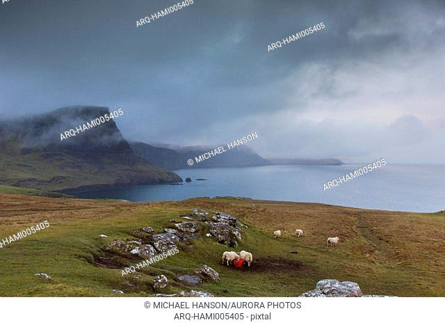 Scenery of coastline in cloudy weather near Neist Point Lighthouse with sheep, Isle of Skye, Scotland, UK