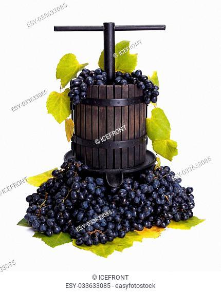 Traditional manual grape pressing utensil in a blue grape bunch