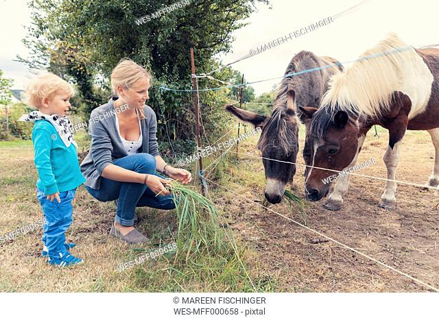 Mother and son feeding a horse with grass