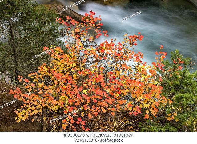 Fall on Johnston Canyon Trail, Banff, Alberta, Canada