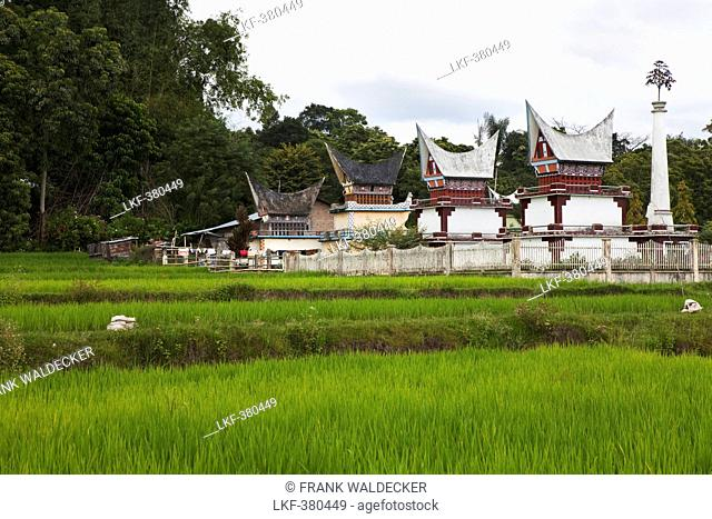 Rice fields and Batak tombs on Pulau Samosir Island in Lake Toba, Island of Sumatra, Indonesia, Southeast Asia