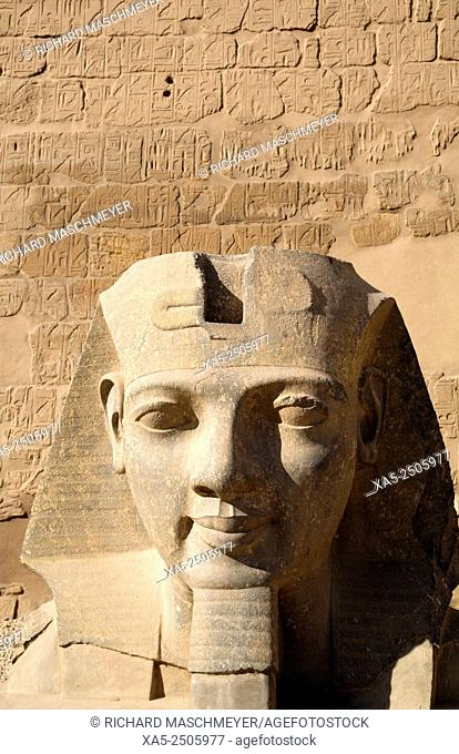 Head of Ramses II, Luxor Temple, Luxor, Egypt