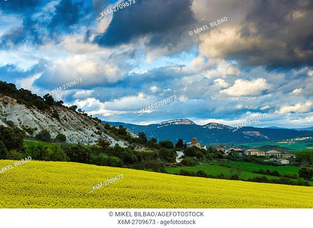 Rapeseed crop (Brassica napus) and Ganuza (Metauten) village. Estella Comarca, Navarre, Spain, Europe