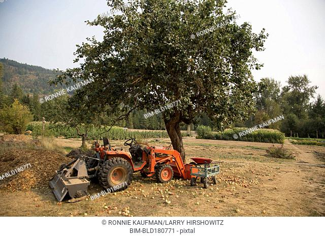 Tractor under fruit tree on farm